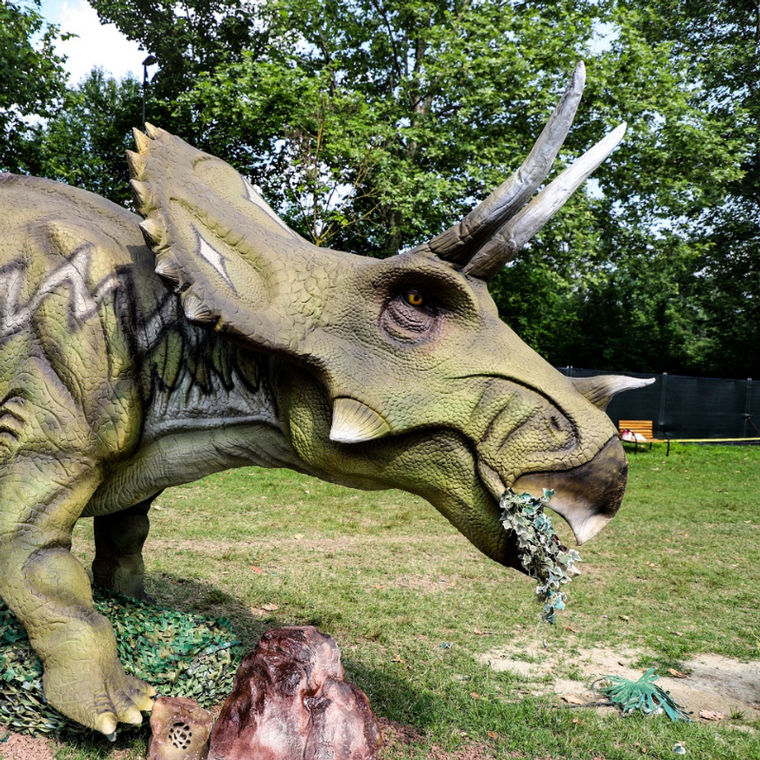 Dinosarus Park