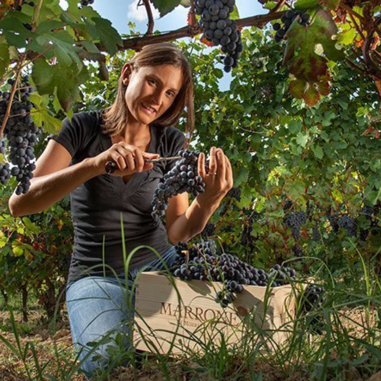 Viticulture lesson and tasting